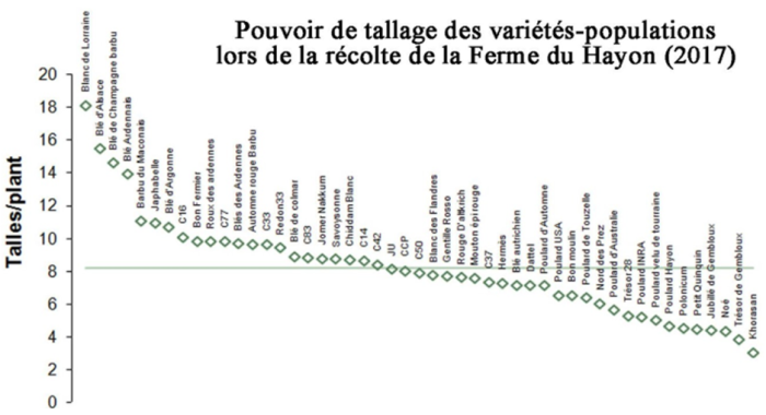 graph tallage.png